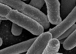 noticia_bacteria